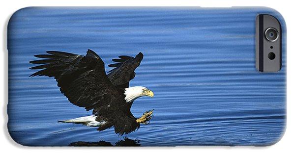 Recently Sold -  - Fauna iPhone Cases - Bald Eagle Striking Kenai Peninsula iPhone Case by Tom Vezo