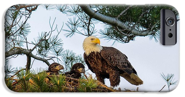 Juveniles iPhone Cases - Bald Eagle with Eaglets  iPhone Case by Everet Regal