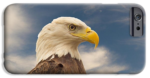 Preditor iPhone Cases - Bald Eagle with Piercing Eyes 1 iPhone Case by Douglas Barnett