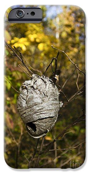 Hornets Nest iPhone Cases - Bald-faced Hornet Nest iPhone Case by Linda Freshwaters Arndt