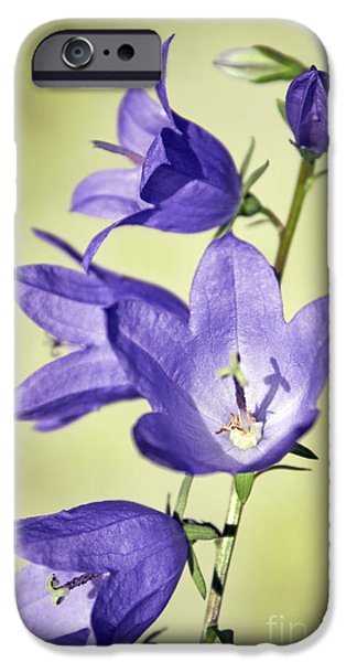 Balloon Flower iPhone Cases - Balloon Flowers iPhone Case by Tony Cordoza