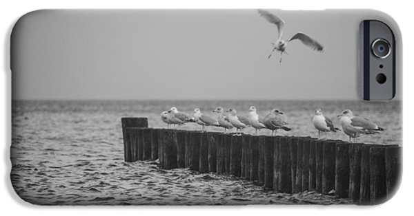 Flying Seagull iPhone Cases - Baltic Sea-Gulls iPhone Case by Ralf Kaiser
