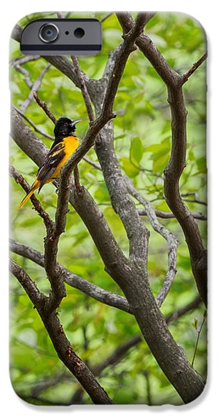 Oriole iPhone Cases - Baltimore Oriole iPhone Case by Bill  Wakeley