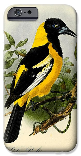 Oriole iPhone Cases - Baltimore Oriole iPhone Case by J G Keulemans
