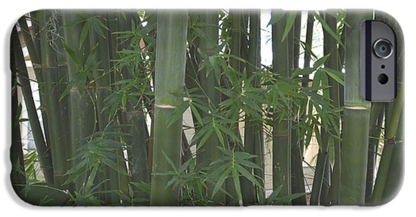 Bamboo Fence Digital iPhone Cases - Bamboo 3 iPhone Case by To-Tam Gerwe