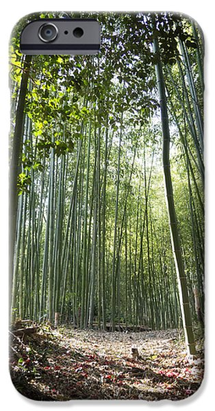 Bamboo Leaves iPhone Cases - Bamboo Forest iPhone Case by John Wong