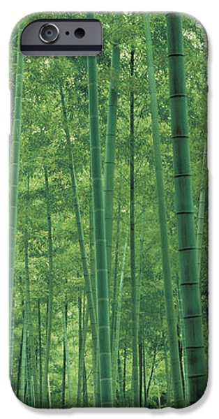 Forest Floor iPhone Cases - Bamboo Forest Nagaokakyo Kyoto Japan iPhone Case by Panoramic Images