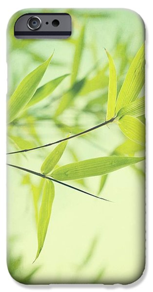 bamboo in the sun iPhone Case by Priska Wettstein