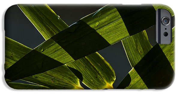 Philodendron iPhone Cases - Bamboo leaves iPhone Case by Roy Thoman