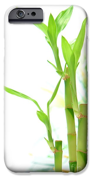 Bamboo Leaves iPhone Cases - Bamboo Stems and Leaves iPhone Case by Olivier Le Queinec