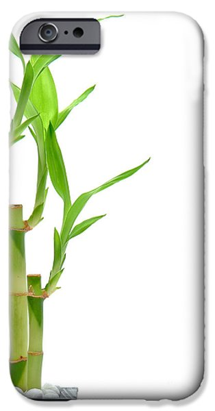 Bamboo Leaves iPhone Cases - Bamboo Stems in Black Vase iPhone Case by Olivier Le Queinec