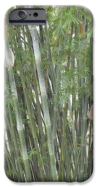 Bamboo Fence iPhone Cases - Bamboo iPhone Case by To-Tam Gerwe