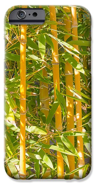 Bamboo Fence iPhone Cases - Bamboo vertical iPhone Case by Christina Rahm