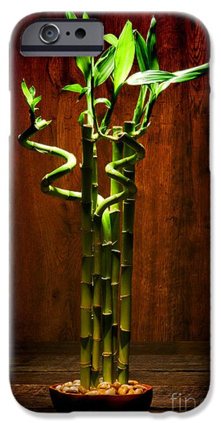 Bamboo Leaves iPhone Cases - Bambooesque  iPhone Case by Olivier Le Queinec