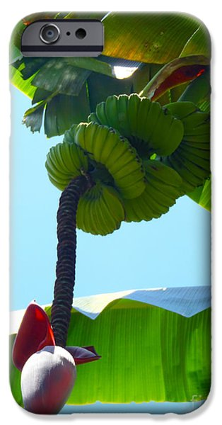 Cutler iPhone Cases - Banana Stalk iPhone Case by Carey Chen