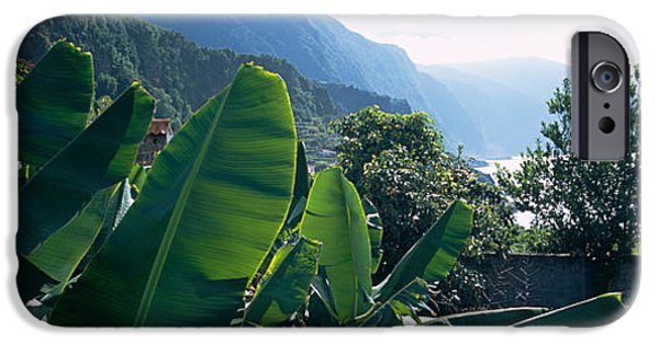Garden Scene iPhone Cases - Banana Trees In A Garden iPhone Case by Panoramic Images