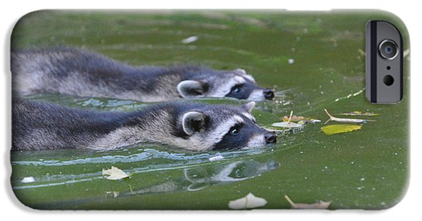 Raccoon iPhone Cases - Synchronized Swimming iPhone Case by Fraida Gutovich