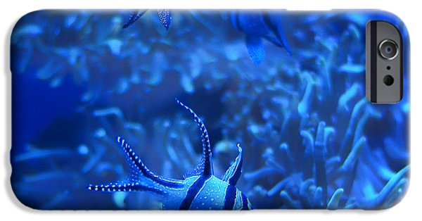 Sea iPhone Cases - Banggai Cardinalfish - Aquarium Blue iPhone Case by Nikolyn McDonald