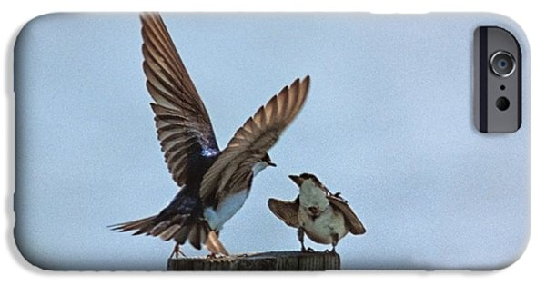 Matting iPhone Cases - Bank Swallow Romance iPhone Case by John Harmon