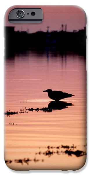 Silhoette iPhone Cases - Bantry Sunset iPhone Case by Eoin Cassidy