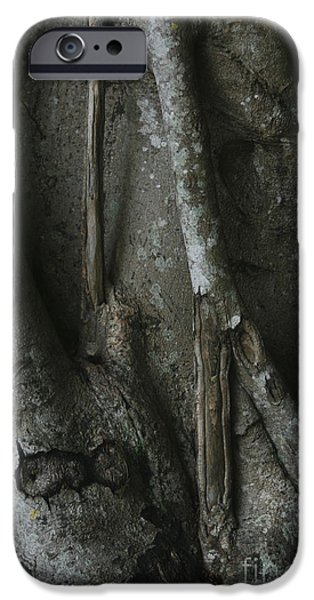 Tree Roots Photographs iPhone Cases - Banyan Tree Roots iPhone Case by Cindi Ressler