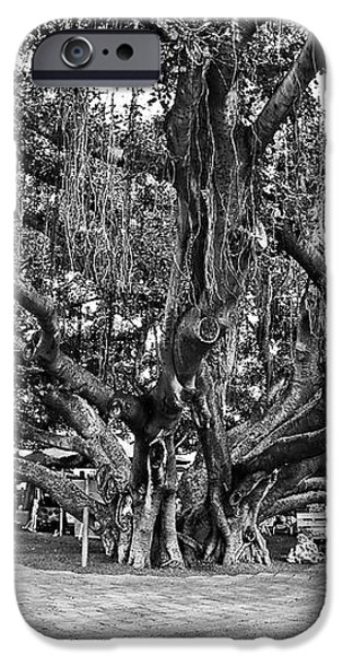Banyan Tree iPhone Case by Scott Pellegrin