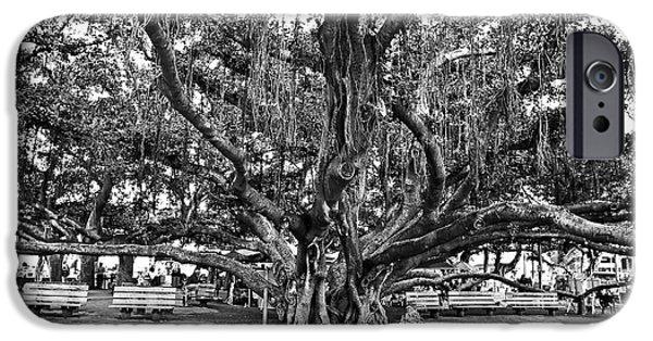 Monochromatic iPhone Cases - Banyan Tree iPhone Case by Scott Pellegrin