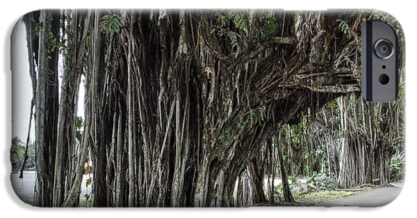 Tree Roots iPhone Cases - BANYAN TREE WALK in HILO HAWAII iPhone Case by Daniel Hagerman