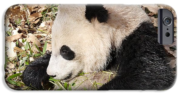 Smithsonian iPhone Cases - Bao Bao is not Bamboozled iPhone Case by Richard Reeve