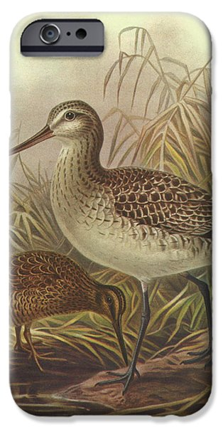 Chatham iPhone Cases - Bar Tailed Godwit and Chatham Island Snipe iPhone Case by J G Keulemans