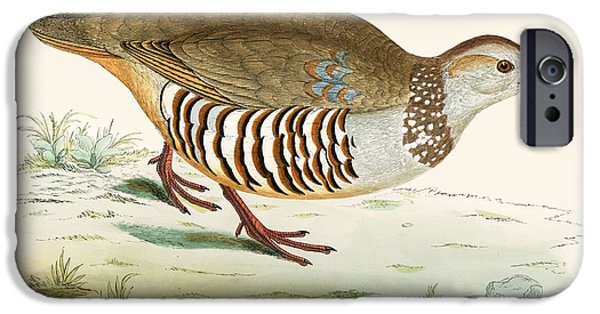 Hunting Bird iPhone Cases - Barbary Partridge iPhone Case by Beverley R. Morris