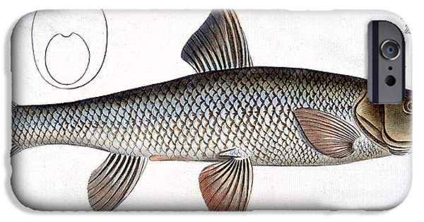 Hunting Drawings iPhone Cases - Barbel iPhone Case by Andreas Ludwig Kruger