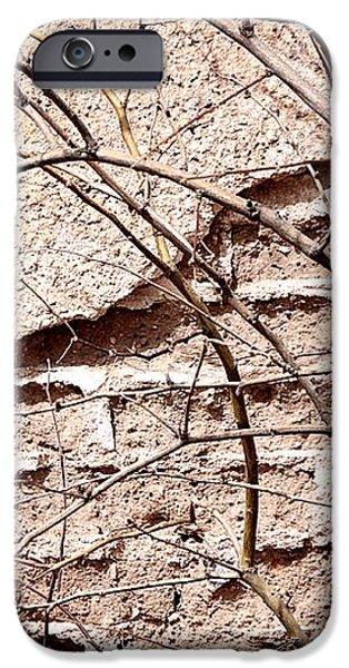 Bare Tree Adobe Wall iPhone Case by Joe Kozlowski