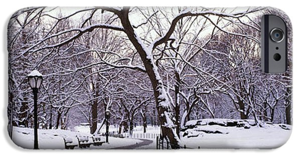 Absence iPhone Cases - Bare Trees During Winter In A Park iPhone Case by Panoramic Images