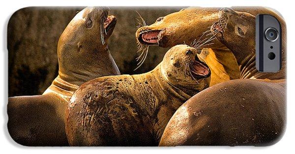 Ocean Mammals iPhone Cases - Bark Bark iPhone Case by Rick Barnard