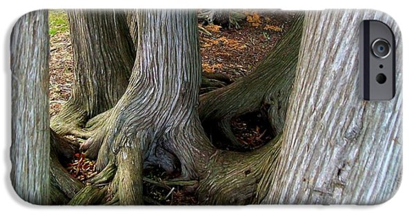 Tree Roots Photographs iPhone Cases - Barky Barky Trees iPhone Case by Michelle Calkins
