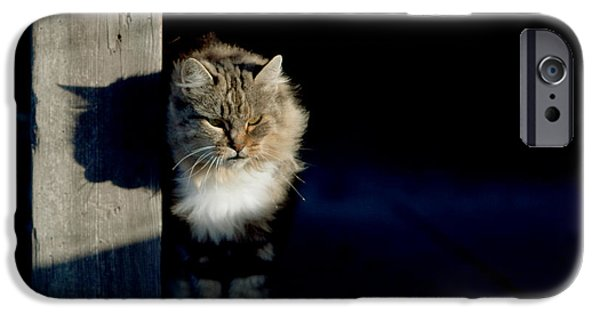 Gray Hair iPhone Cases - Barn Cat iPhone Case by Art Block Collections