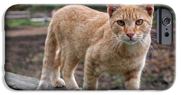 Cat Art iPhone Cases - Barn Cat iPhone Case by Rona Black