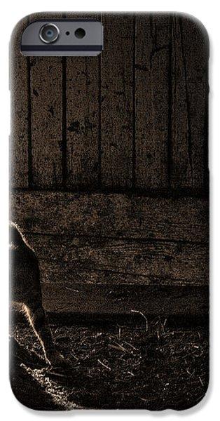 BARN CAT iPhone Case by Theresa Tahara