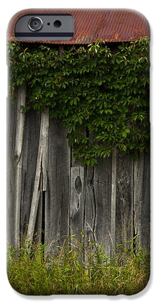 barn eyes iPhone Case by Shane Holsclaw