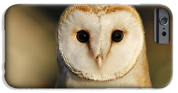 Barn Owl iPhone Cases - Barn Owl Beauty iPhone Case by Roeselien Raimond