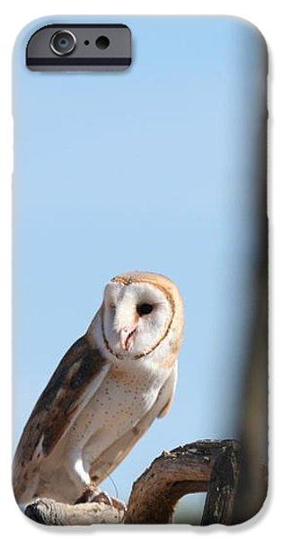 barn owl iPhone Case by David S Reynolds