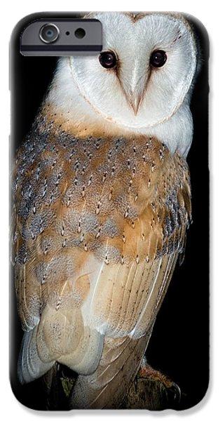 Barns iPhone Cases - Barn Owl  iPhone Case by Ian Hufton