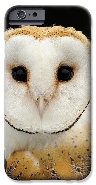 Disc iPhone Cases - Barn Owl iPhone Case by Malcolm Schuyl FLPA