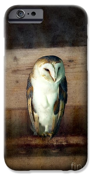 Animal Wisdom iPhone Cases - Barn owl vintage iPhone Case by Jane Rix