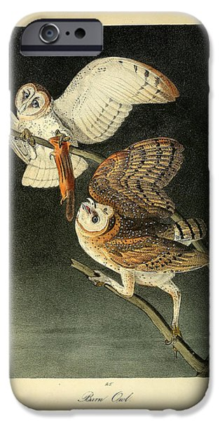 Business Drawings iPhone Cases - Barn Owls iPhone Case by John James Audubon