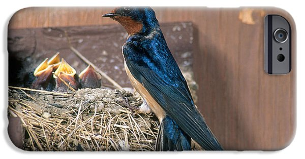 Hirundo iPhone Cases - Barn Swallow At Nest iPhone Case by Anthony Mercieca
