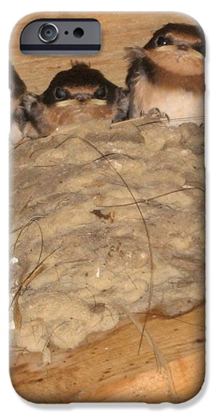 Barn Swallow Chicks 2 iPhone Case by Conni Schaftenaar Elderberry Blossom Art