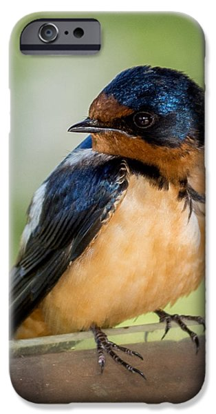 Barn Swallow iPhone Case by Ernie Echols