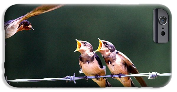 Barn Swallow iPhone Cases - Barn Swallow - Feeding the Babies iPhone Case by Travis Truelove